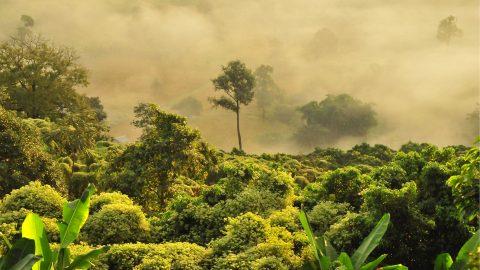 Tropisher Regenwald Kinderprogramm Sommer 2019 Tollwood